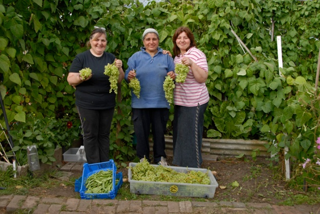 Adile (centre) and two friends show the bounty of their final grape crop.