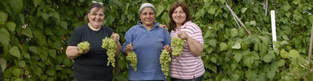 Adile (centre), with friends, showing the bounty of her final crop from her allotment. Manor Gardens, 2007