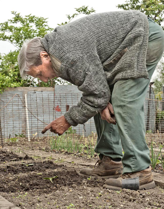 Tommy Norris, aged 83, tells a marrow seedling, grown from a 40 year old packet of seeds, to keep going.